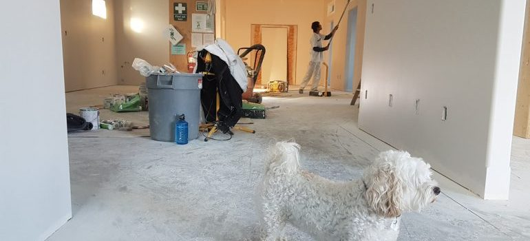 A dog and a contractor in a remodeled home.