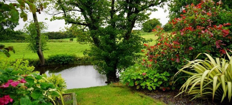 A garden with a pond and trees.